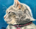 Custom Cat Portrait oil pastel painting maine coon pet memorial Indy