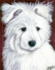 Custom Dog Portrait american eskimo miniature poodle puppy india ink painting Lexie
