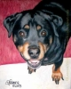 Custom Dog Portrait rottweiler oil pastel painting Sweetie