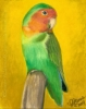 Lovebird painting oil pastel original art pet bird print
