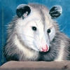 200411 Possy II possum opossum painting original pet art