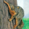 200413 Squirrely brown squirrel wildlife nature art painting