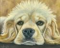 200415 Blondie dog art cocker spaniel painting original portrait