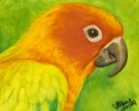 200417 Elvis II sun conure bird painting oil pastel original art portrait