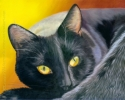 200418 Autumn Eyes black cat oranges pet painting art