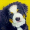 200421 Bernese Pup puppy dog oil portrait pet painting mountain dog art