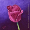 purple tulip original india ink painting