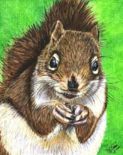 200429 Squirrely III brown squirrel india ink wildlife painting