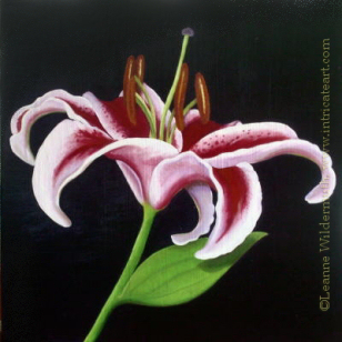 Stargazer Lily flower original floral oil painting by Leanne Wildermuth