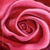 first prize pink rose oil painting art