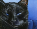black cat blue eyes oil painting portrait art