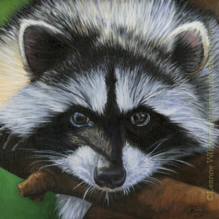 raccoon painting oil wildlife nature Coon