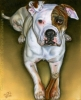 Custom Dog Portrait oil pet painting american bulldog Sheba