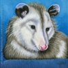 200505 Custom Wildlife Portrait opossum possum painting art oil Possy III