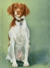 custom dog art oil painting ellie brittany spaniel pet art