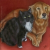 pet pets dog cat portrait golden retriever tuxedo oil painting