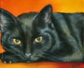 black pet cat portrait oil painting art