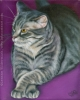 gray grey tabby pet cat painting oil portrait
