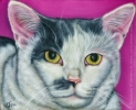 angel cat portrait painting pink gray white art