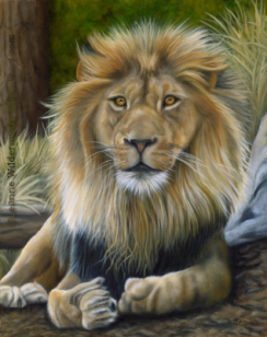 200522 Custom Wildlife Painting Lion oil art