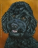 black poodle pet painting custom dog portrait oil