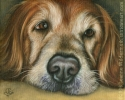 custom dog portrait pet art golden retriever painting