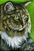 custom cat portrait oil painting original traditional realistic fine art
