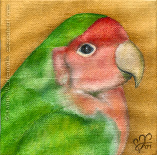 custom oil painting bird lovebird portrait original traditional realistic fine art