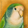 custom lovebird portrait painting fine art oil bird