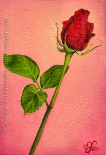 red rose oil painting original custom artwork realism flower