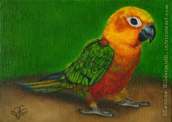 custom bird sun conure parrot oil painting portrait fine art