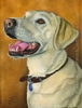 custom oil painting dog portrait yellow lab original traditional realistic fine art