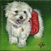 Custom Dog Portrait Baby Buffy havanese bichon frise oil painting original traditional realistic fine art