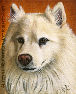 Custom Dog Portrait Lacy American Eskimo oil painting original traditional realistic fine art