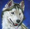 Custom Dog Portrait Badger Siberian Husky silver oil painting original traditional realistic fine art