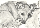 Custom Dog Portrait Bailey pencil graphite drawing art by Leanne Wildermuth