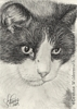 Custom Cat Portrait Salvadore Dali pencil graphite drawing art by Leanne Wildermuth