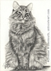 Custom cat Portrait Willie pencil graphite drawing art by Leanne Wildermuth