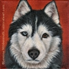 Custom Dog Portrait Taysia Blue black white husky oil painting original traditional realistic fine art Leanne Wildermuth