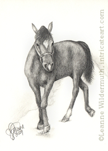 Custom horse portrait pencil graphite drawing art by Leanne Wildermuth