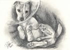 Custom dog portrait pencil graphite drawing art by Leanne Wildermuth