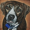 Custom Dog Portrait pit bull terrier Josie oil painting original traditional realistic fine art Leanne Wildermuth