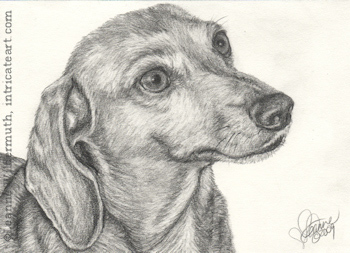 Custom Dachshund dog portrait pencil graphite drawing art by Leanne Wildermuth