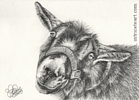 Custom goat portrait pencil graphite drawing art by Leanne Wildermuth