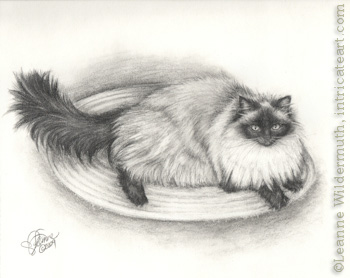 Custom cat long haired Siamese portrait pencil graphite drawing art by Leanne Wildermuth