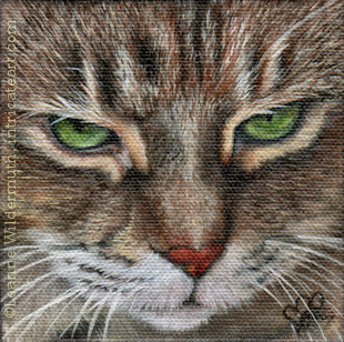 Custom tabby cat portrait oil painting art by Leanne Wildermuth