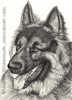Custom German Shepherd dog portrait pencil graphite drawing art by Leanne Wildermuth