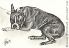 Custom dog portrait boston terrier pencil graphite drawing art by Leanne Wildermuth