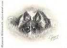 Custom dog portrait sheltie pencil graphite drawing art by Leanne Wildermuth