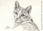 Cat portrait orange white tabby pencil graphite drawing art by Leanne Wildermuth